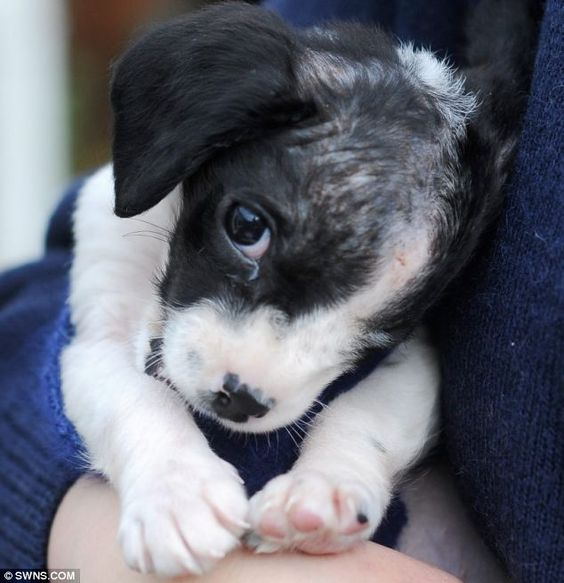 Bob was just eight weeks old and weighed less than a kilo when he was found, shivering from the cold and in agony from a ruptured eyeball. How can people be so cruel. Thankfully he has made a full recovery! :)