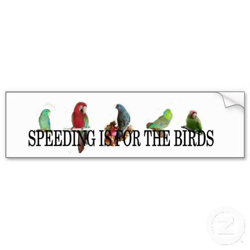 Speeding is for the birds.jpg bumper sticker