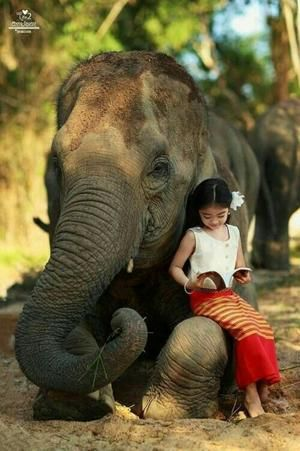 The Elephant Who Stopped For a Child...see more at PetsLady.com -The FUN site for Animal Lovers