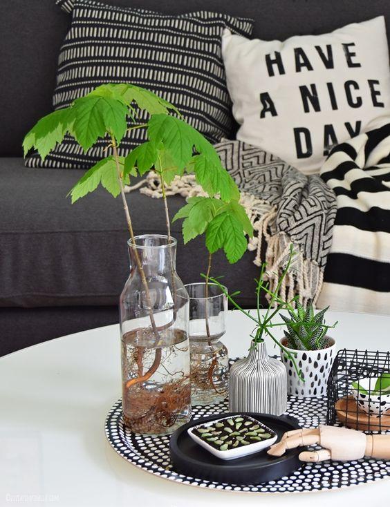 interior wohnen mit pflanzen ahorn b umchen im glas und sukkulenten ableger. Black Bedroom Furniture Sets. Home Design Ideas
