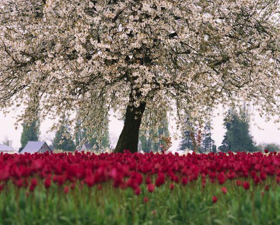 10) Japanese Cherry Blossom