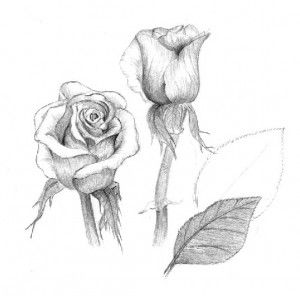 Rose sketch-Option #2.  This sketch has a little more detail than option #1 but is still a basic rose drawing.  Capture the natural beauty of the rose with shading.  Pay attention to the shapes of the petals.