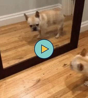 o cachorrinho se a sustou com seu próprio reflexo