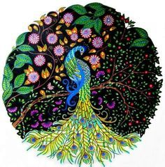 jardim secreto pavão - Pesquisa do Google