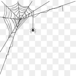 Spider Web Decoration Pattern Spider Clipart Spider Spider Webs Png And Vector With Transparent Background For Free Download Spider Web Drawing Spider Drawing Spider Silk