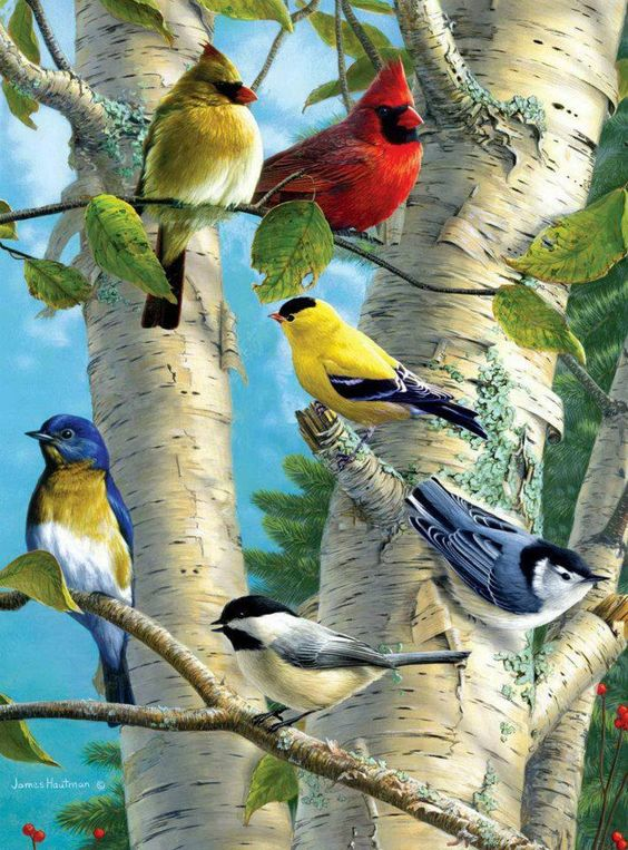 cardinals, goldfinch, bluebird, nuthatch, chickadee:
