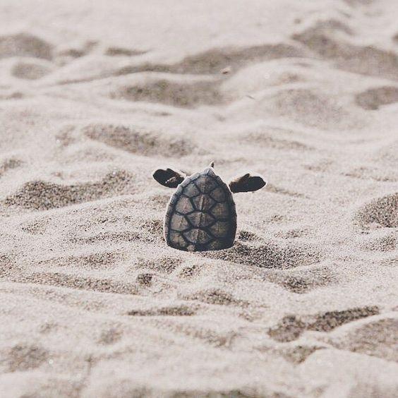 Hewan kura-kura