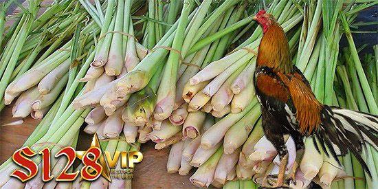 Kegunaan Daun Serai Untuk Adu Ayam S128 Daun Serai Merupakan Salah Satu Tumbuh Tumbuhan Yang Mempunyai Banyak Manfaat Yang Biasanya Di Gunakan Serai Ayam Daun