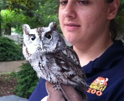 Connecticut Beardsley Zoo owl up close with it's handler