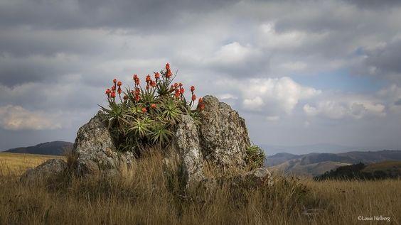 Nature's bouquet.
