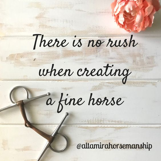 There is no rush when creating a fine horse - Lindsey Rains, Alta Mira Horsemanship