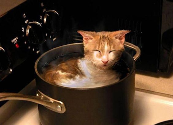 Hot Tub - he likes it, not hurting the cat