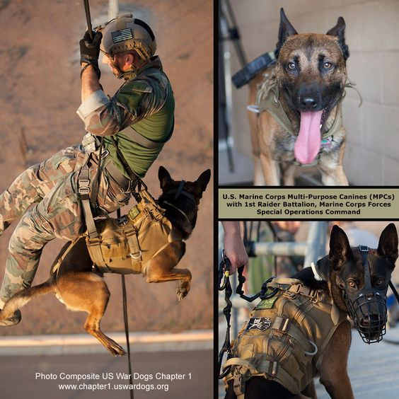 U.S. Marine Corps Multi-Purpose Canines (MPCs) with 1st Raider Battalion, Marine Corps Forces Special Operations Command