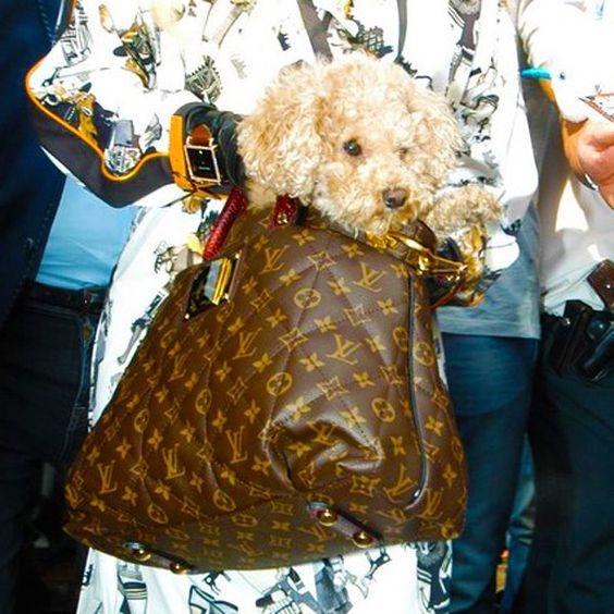 Lady Gaga's dog Fozzi