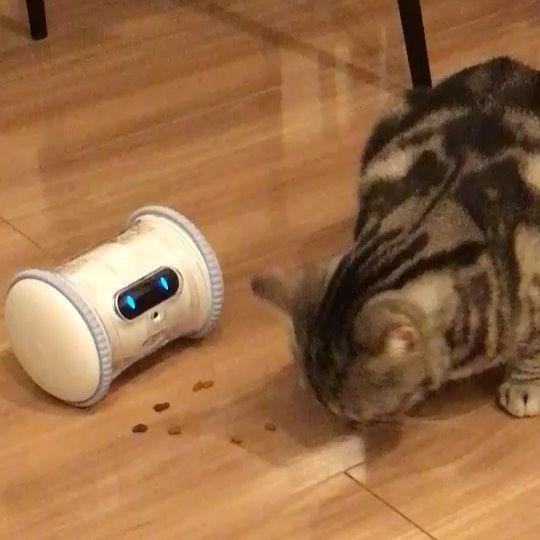 Pin By ましゅまろ On 猫部屋