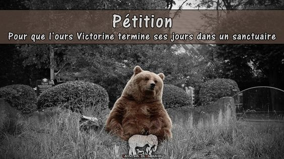 For the bears Victorine ended his days in a sanctuary