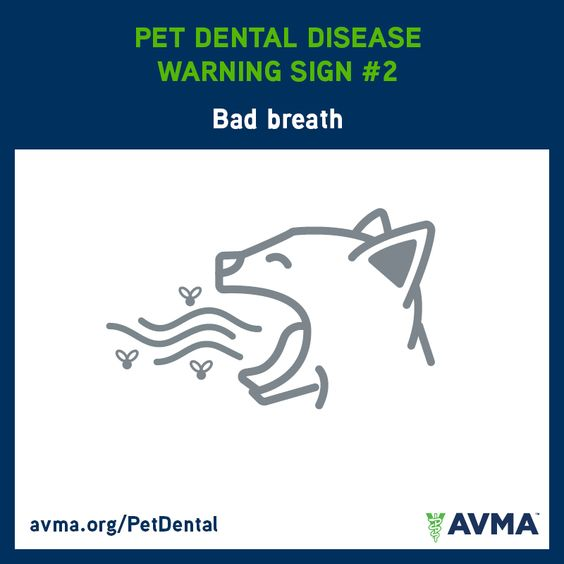 Does your pet have bad breath? It could be a sign of a more serious problem. For more information about pet dental health and the importance of preventive care, visit avma.org/PetDental