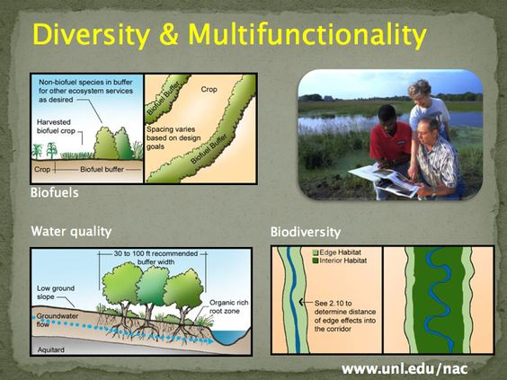 By including diversity within the landscape, we're able to increase the multifunctionality of the land. Forest farming, for instance, utilizes the understory while boosting plant diversity and providing pollinator services. Slide courtesy of the USDA's National Agroforestry Center.