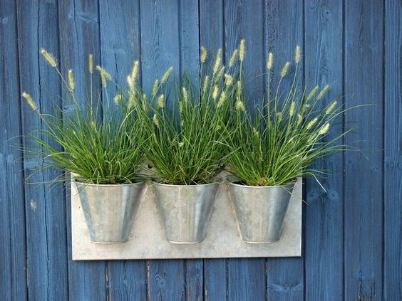 Grasses, containers, fence: