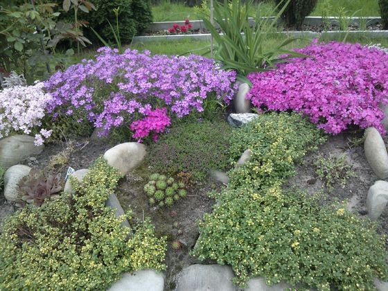 Sukulenty Na Skalniaku Plants