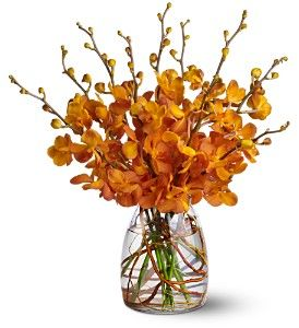 Orchid Embers in Buffalo NY, American Beauties Florist