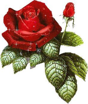 Imagenes de flores que brillan y se mueven
