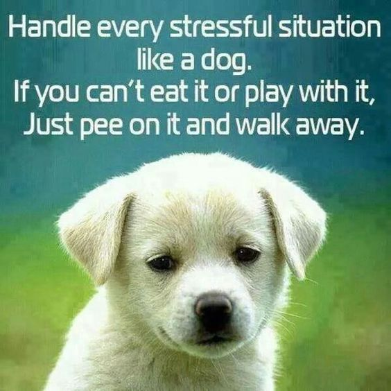 dog pee on it and walk away - Google Search