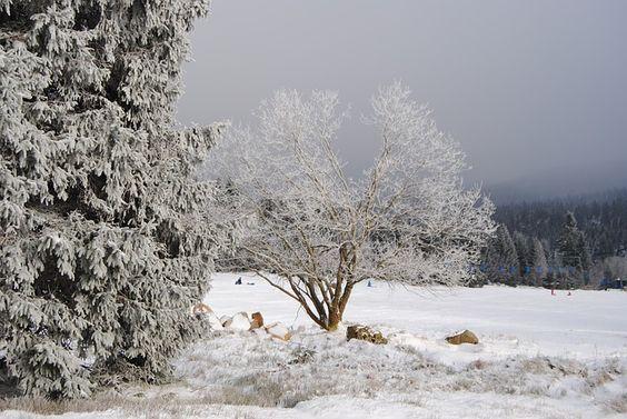 Ein winterlicher Gruß aus Torfhaus im Oberharz. #winter #urlaub #harz www.premium-unterkunft.de