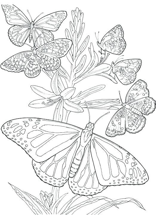 Printable Monarch Butterfly Coloring Pages Free Butterfly Coloring Page Flower Coloring Pages Free Coloring Pages