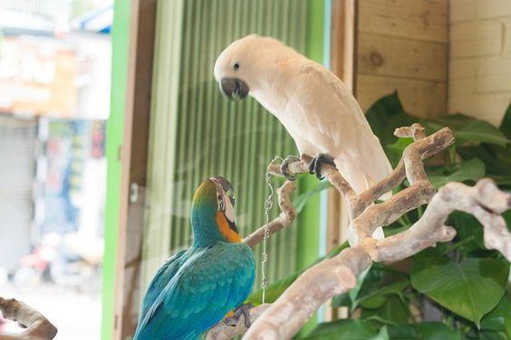 In Saigon, a cafe for bird lovers