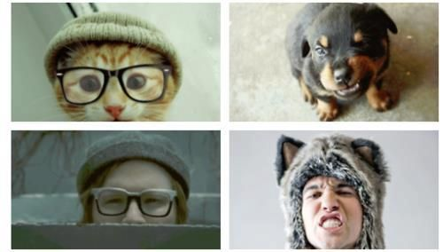 Pete Wentz Patrick Stump Fall Out Boy Cat Dog