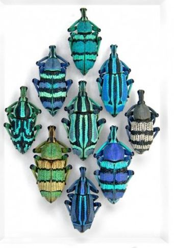 Beetles #Symbolism http://www.symbolic-meanings.com/2010/06/27/symbolic-meaning-of-beetles/ •Progress •Simplicity •Persistence •Stability •Methodical •Contemplative •Practical •Grounded •Potential •Security •Introverted •Protection •Solidarity: