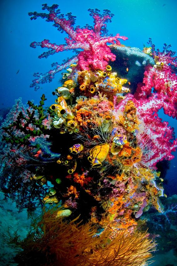 """I took this photo on a reef named after me...""""Scotty's Reef""""...we may have been the first people to ever dive in this spot, and I liked it so much, my friend Max named the site after me...incredible corals!! //  By Scotty Graham"""