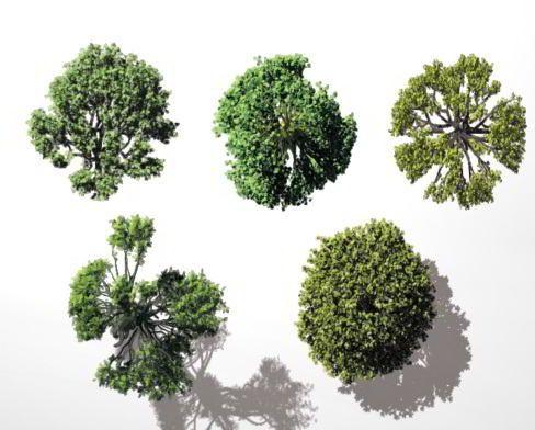Download Dosch Vizimages Bird S Eye Trees 3dmaxfarsi Tree Photoshop Architectural Trees Tree Plan