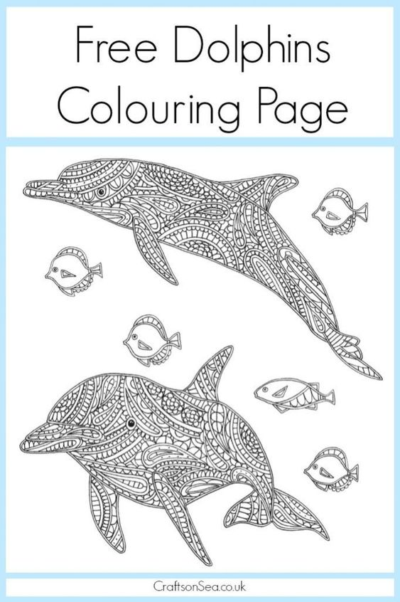 free dolphin colouring page for adults book dolphins and free samples