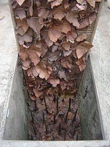 Củ Chi tunnels - Wikipedia, the free encyclopedia