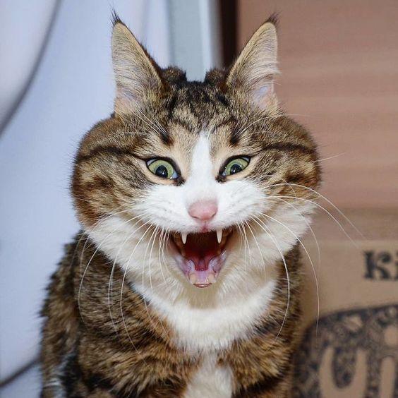 Ce chat a conquis le coeur des internautes grâce à ses expressions faciales hilarantes, et malgré son problème – ipnoze