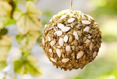 Check out this guide to find 4 simple and unique uses for pumpkin seeds. For more articles full of fun and new inspiration, visit P&G everyday today!