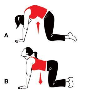 Cat & Camel exercise for Symphysis pubis dysfunction (SPD)