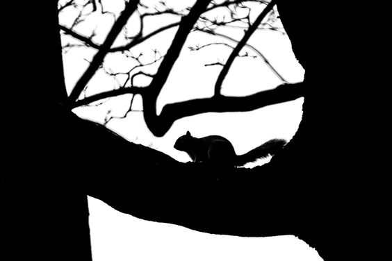 Back light - silhouette by 8th Sinner, 500px