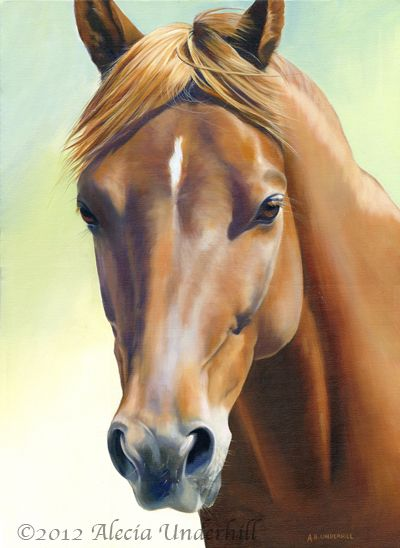 Serenity ~ oil on gallerywrap canvas of a chestnut Morgan mare. ©Alecia Underhill