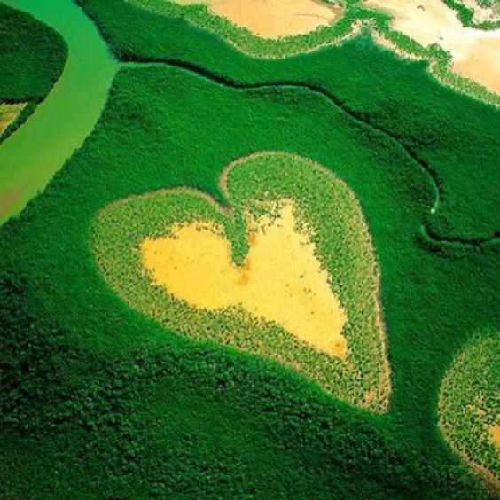 || #green #vert #groen #verde #Grun #photo #picture || follow http://www.pinterest.com/lcottereau/just-green/