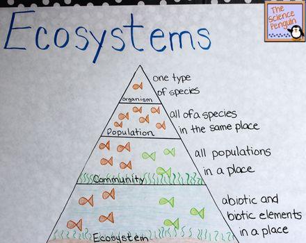 Ecosystems Pyramid Anchor Chart