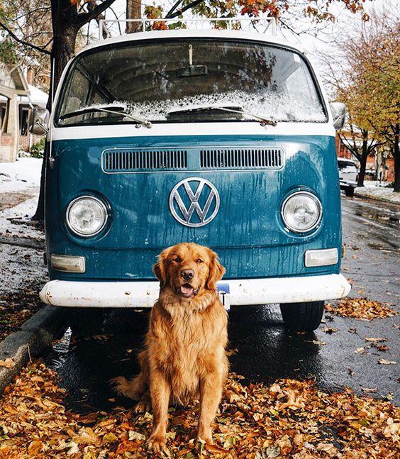 Ce chien a la chance d'accompagner ses maîtres en vacances et les photos de leurs périples sont absolument géniales !