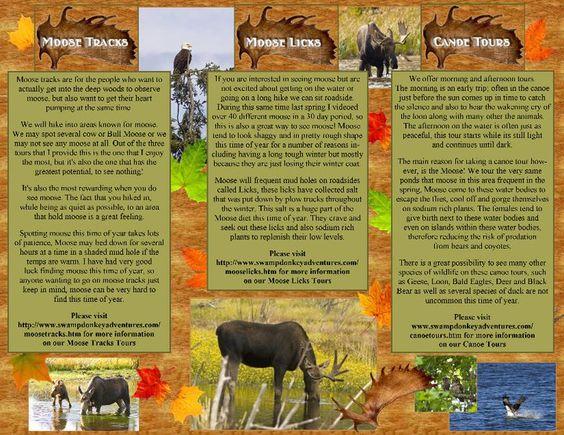 Swamp Donkey Adventure brochure