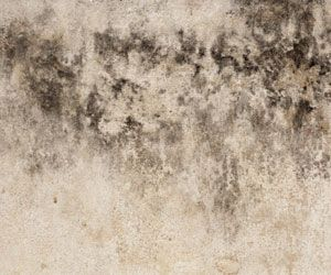 How to Remove Mildew Stains - howtocleanstuff.net