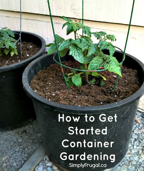 Container gardening vegetables and summer on pinterest - Soil for container vegetable gardening ...