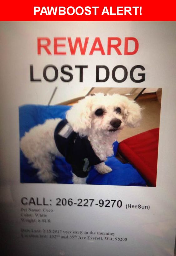 Please spread the word! Coco was last seen in Everett, WA 98208.    Nearest Address: Near 124th St SE & 21st Ave SE