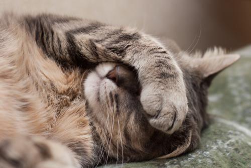 25 signes qui montrent que votre chat ne va pas bien
