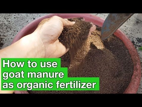 Is Sheep Manure Good For Vegetable Gardens